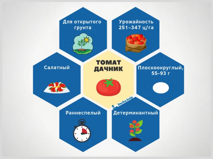 инфографика сорт Дачник