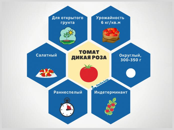 Инфографика сорта томата Дикая роза
