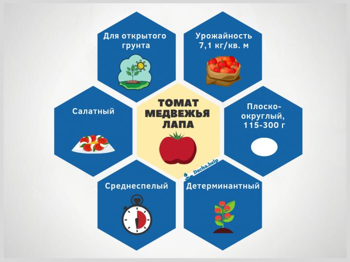 Инфографика томат Медвежья лапа