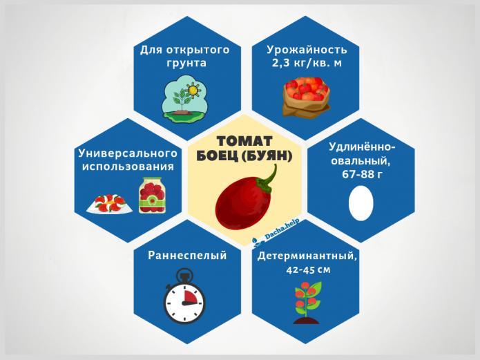 Инфографика томат Боец