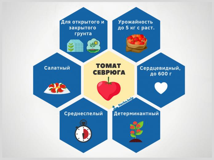Инфографика томат Севрюга