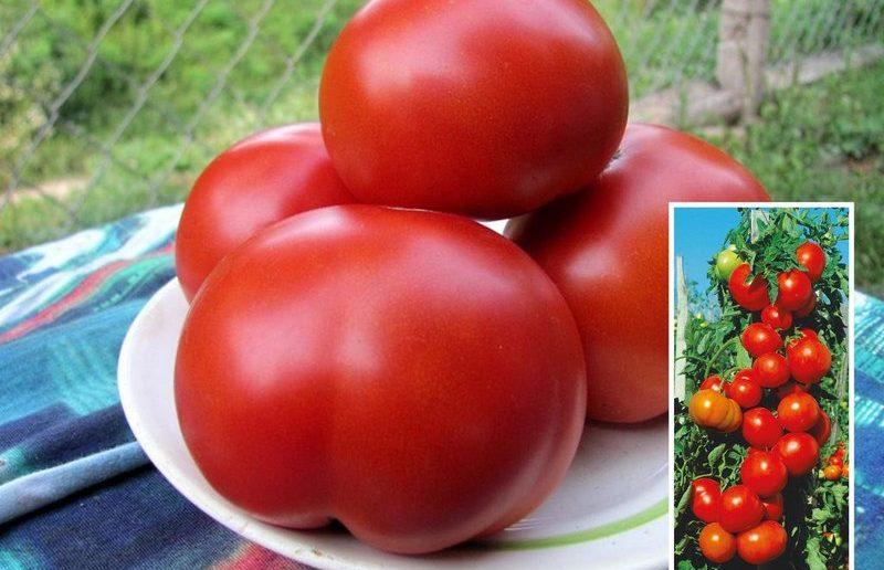томат спасская башня описание сорта фото отзывы