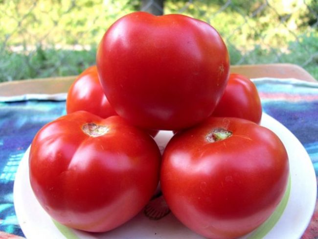 Плоды томата Спасская башня