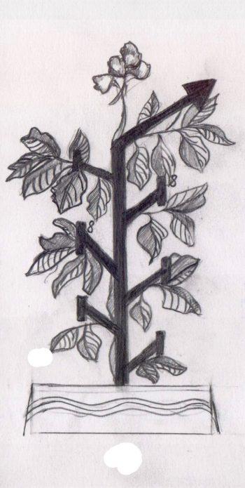 Схема формирования куста томата в один стебель
