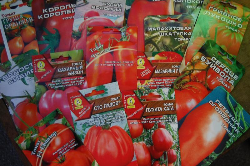 Через сколько дней после посева всходят семена помидор