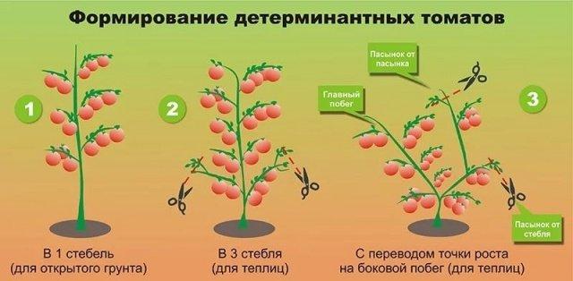 Формирование томатов в 1 и 3 стебля