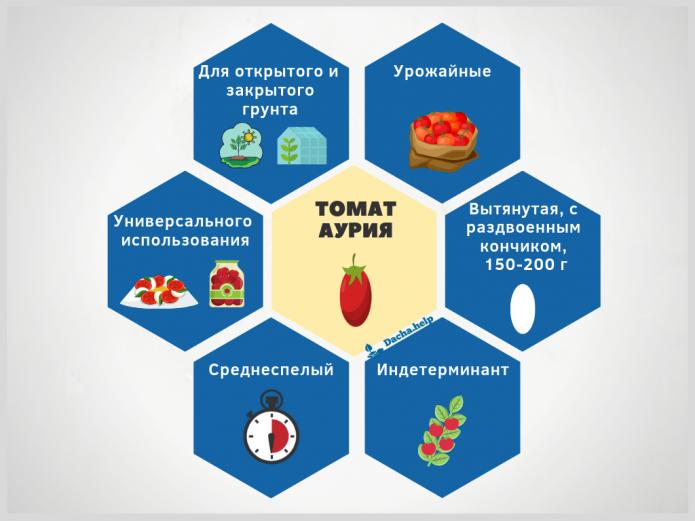 инфографика томат Аурия