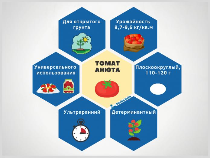 инфографика томат Анюта