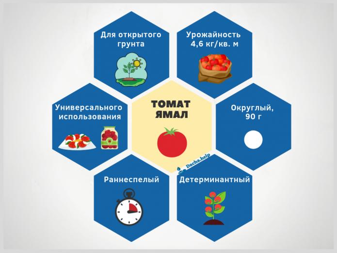 инфографика томат Ямал