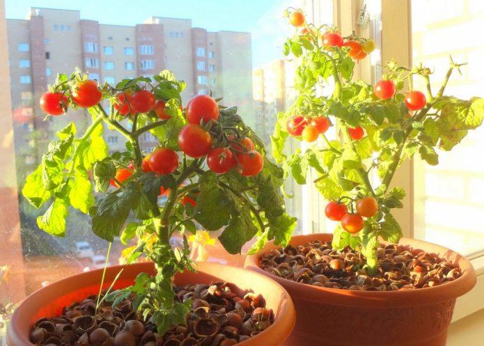 солнце на балконе томаты