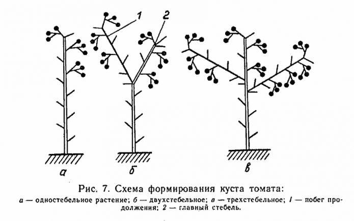формирование томата в 3 стебля