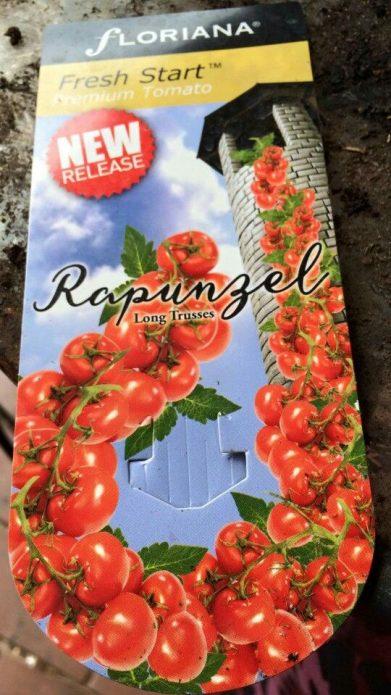 Rapunzel Tomato seed