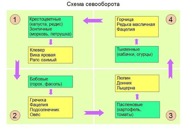 Схема севооборота