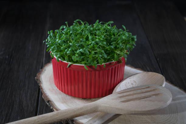 Кресс-салат в горшке
