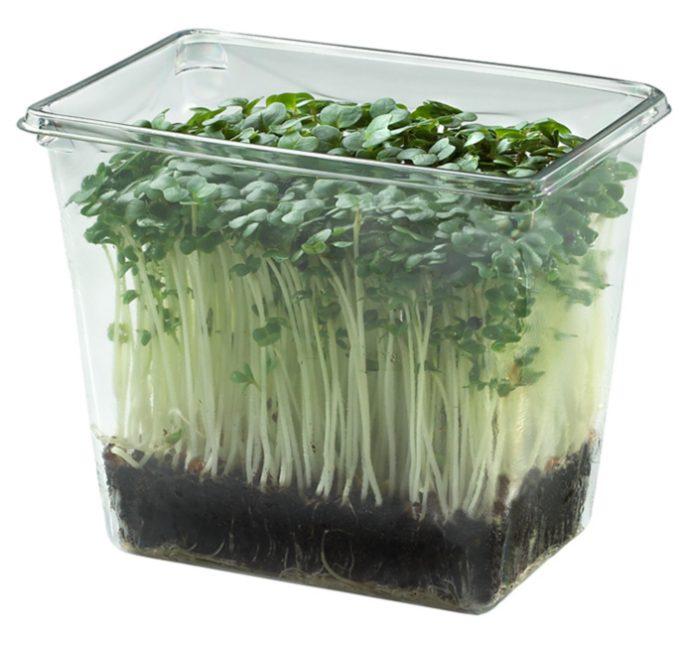 Кресс-салат в прозрачном контейнере