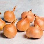 Луковицы сорта Еллоу Мун