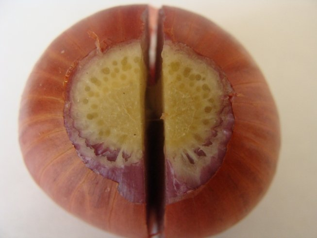 Разрезка посадочной луковицы