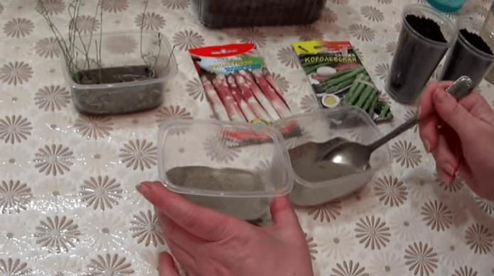 Плошки с песком, пакеты с семенами, рассада спаржи на столе
