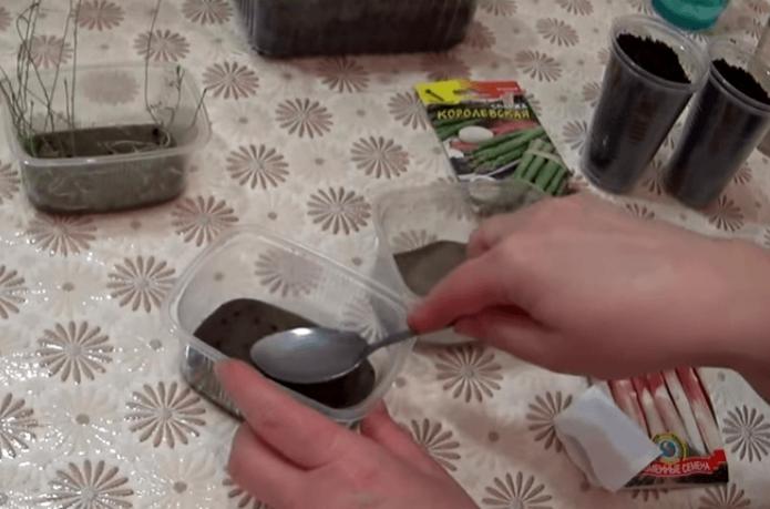 Плошки с песком, семенами и рассадой на столе