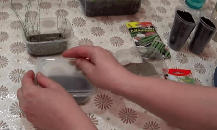 Контейнеры для рассады на столе
