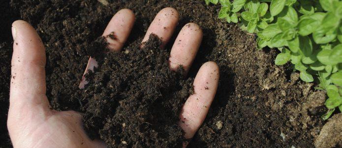 Почва на ладони