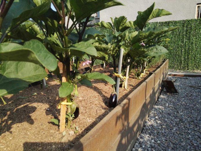 Подходящее место для выращивания баклажанов