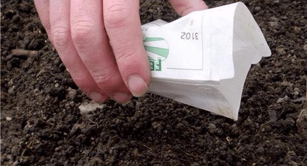 Посев брюквы на рассаду