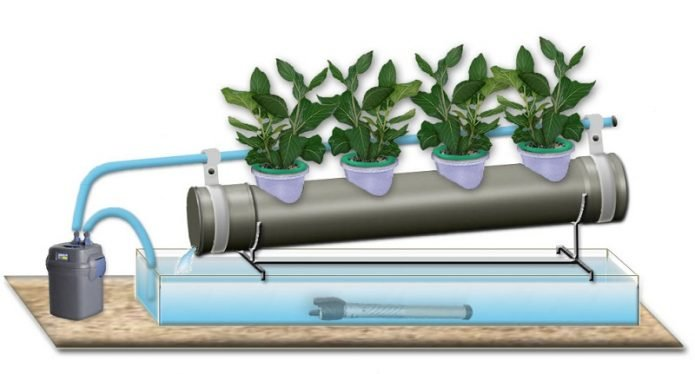 Выращивание зелени на гидропонике