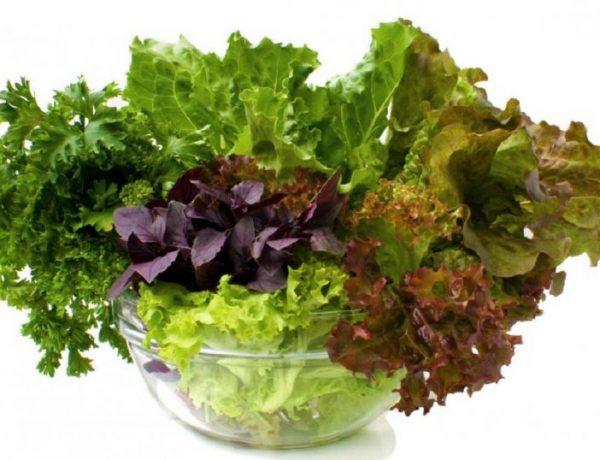 Выращивание зелени: что посадить, как ухаживать и защитить от болезней и вредителей