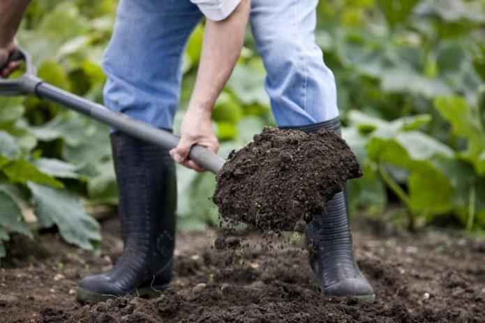 Вскапывание почвы под дайкон