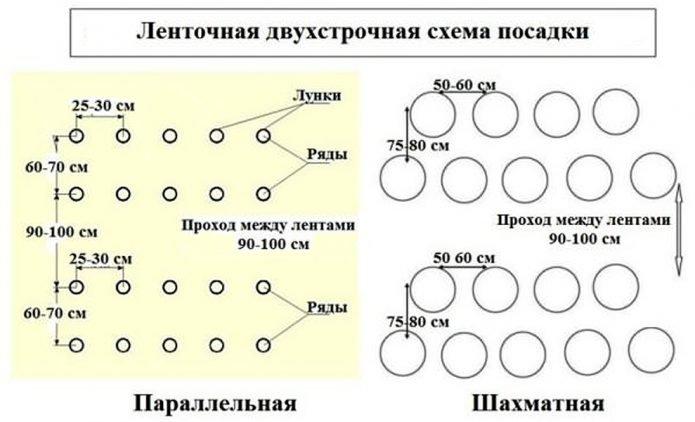схема посадки баклажанов