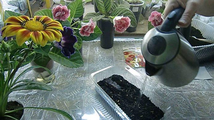 Посев семян в кипяток с использованием грунта