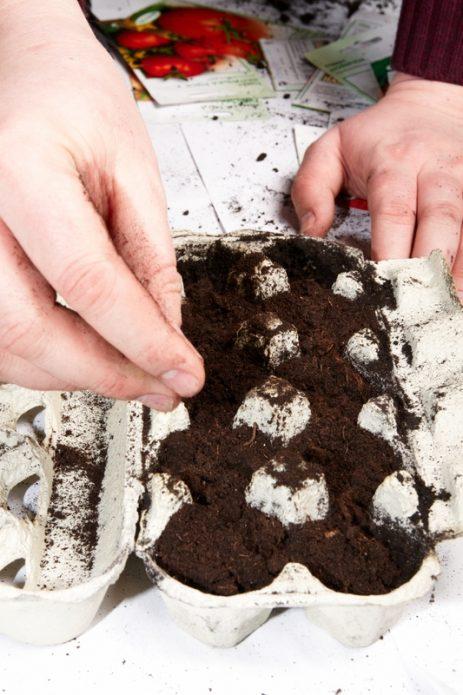 Кассета из-под яиц для выращивания рассады
