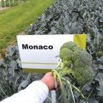 Брокколи Монако