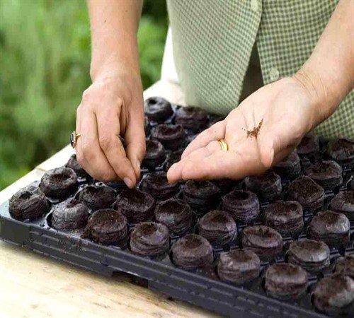 Посев семян в торфяные горшочки