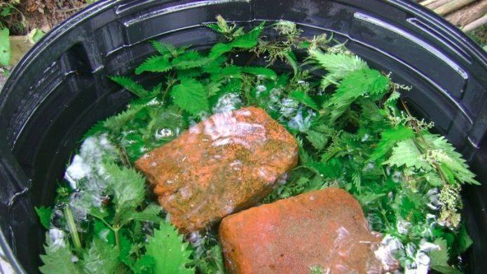 Зелёное удобрение из свежей крапивы
