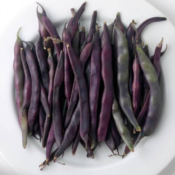 Фасоль Виолетта