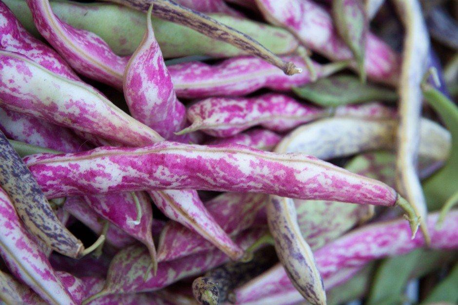 Фасоль Розовая