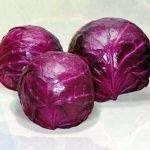 Краснокочанная капуста сорта Каменная головка 447