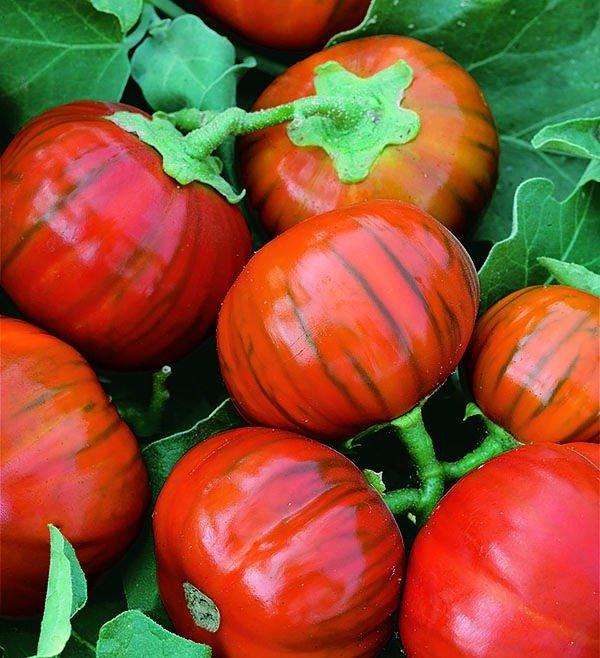 Баклажан сорта Турецкий оранжевый