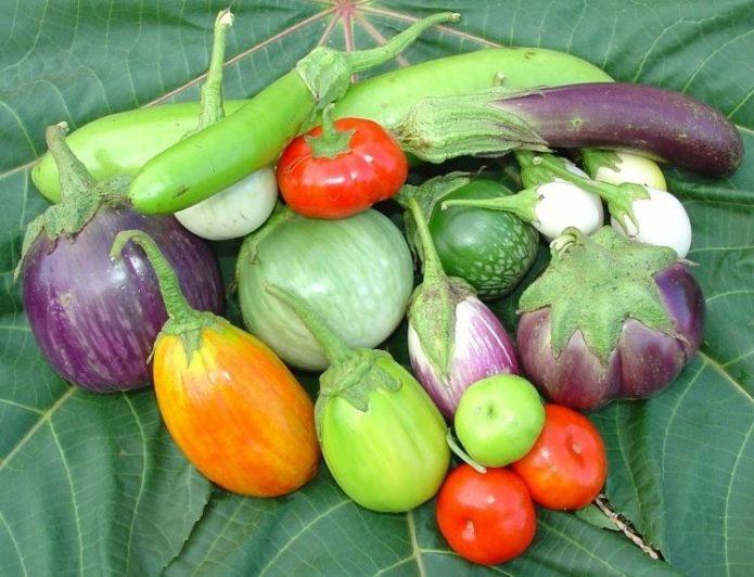 Разнообразие плодов баклажанов