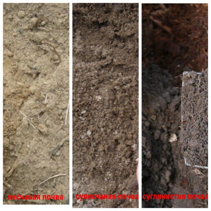 Виды почв