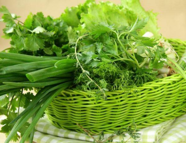 Сорви и съешь: вкусная и полезная зелень в вашем огороде