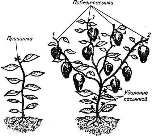 Схема пасынкования баклажана