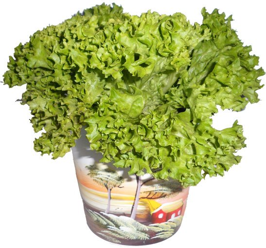 Листовой салат из магазина