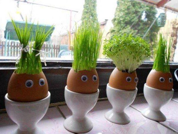 Мини-огород в яичной скорлупе