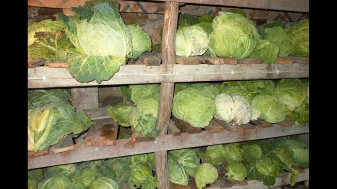 Хранение капусты в подвале