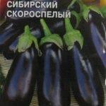 Сорт баклажана Сибирский скороспелый