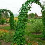 Опора для растений в виде арки