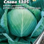 Сорт капусты Слава 1305